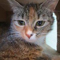 Adopt A Pet :: Fluffy - Cambridge, MD