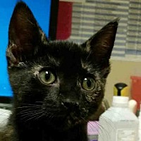 Adopt A Pet :: CANEY - Rogers, AR