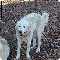 Adopt A Pet :: Dakota - Dandridge, TN
