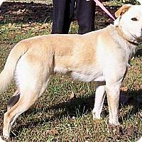 Adopt A Pet :: Sammy - Byrdstown, TN