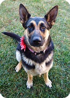 German Shepherd Dog Dog for adoption in Dublin, California - Petra