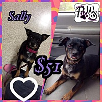 Adopt A Pet :: Sally - Fowler, CA