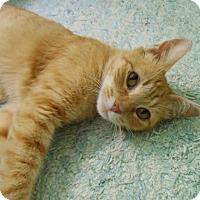 Adopt A Pet :: Rosie - Pineville, NC