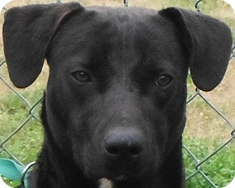 Labrador Retriever/Basset Hound Mix Dog for adoption in Cedartown, Georgia - 30265685