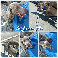 Adopt A Pet :: Auggie & Mia - Sun Valley, CA