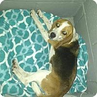 Adopt A Pet :: Merry - Shelter Island, NY