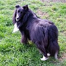 Adopt A Pet :: Maeve