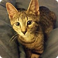 Adopt A Pet :: Sammy - LaGrange Park, IL