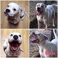 Adopt A Pet :: Dixie - Hartwell, GA