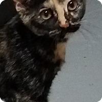 Adopt A Pet :: Emma - Colfax, IA
