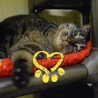 Adopt A Pet :: Susie - Calgary, AB