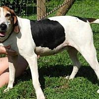 Adopt A Pet :: Sweetie - Elmwood Park, NJ