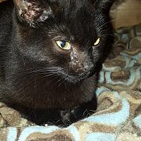 Adopt A Pet :: Gretchen - Delmont, PA