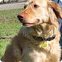 Adopt A Pet :: Kiki - New Canaan, CT