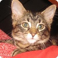 Adopt A Pet :: Augusta - Dallas, TX