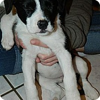 Adopt A Pet :: Janet - Ryland Heights, KY