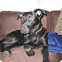 Adopt A Pet :: Cindy - Lewisville, IN