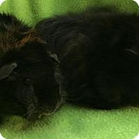 Adopt A Pet :: Buckey - Highland, IN
