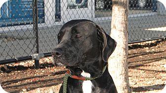 Labrador Retriever Mix Dog for adoption in Brattleboro, Vermont - Peyton
