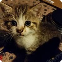 Adopt A Pet :: Pi - Trenton, NJ