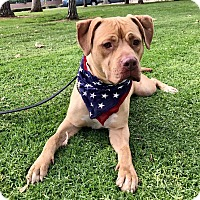 Adopt A Pet :: Mandy - Las Vegas, NV