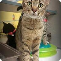 Adopt A Pet :: mama threadgoode - Gulfport, MS