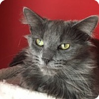 Adopt A Pet :: Max - McHenry, IL