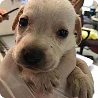 Adopt A Pet :: H. Hal - Freeport, FL