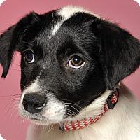 Adopt A Pet :: Queenie - Crossville, TN