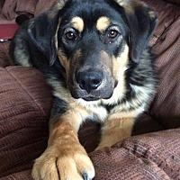 Adopt A Pet :: Lewis - Dodson, MT