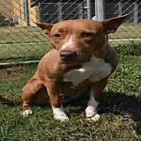Adopt A Pet :: NYMERIA - Norman, OK
