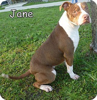 Bulldog Mix Dog for adoption in Georgetown, South Carolina - Jane