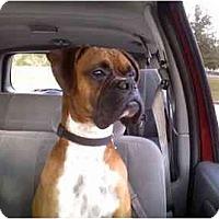 Adopt A Pet :: Sawyer - Thomasville, GA