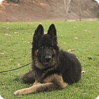 Adopt A Pet :: Noah - Laguna Niguel, CA