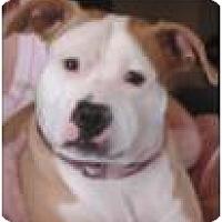 Adopt A Pet :: Carmella - Beachwood, OH