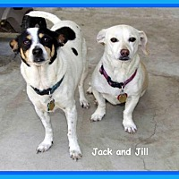 Adopt A Pet :: Jack - Midway City, CA