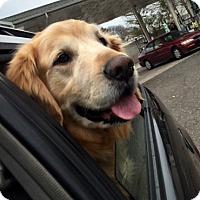 Adopt A Pet :: Dallas - New Canaan, CT