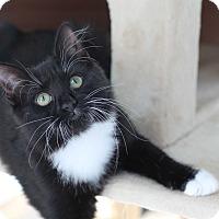 Adopt A Pet :: Mischief - Richmond, VA