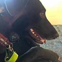 Adopt A Pet :: Jazz - Thornton, CO