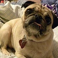 Adopt A Pet :: Nelly - Farmington, MI