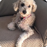 Adopt A Pet :: Teddy - Atlanta, GA