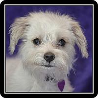Adopt A Pet :: Skylar - San Diego, CA