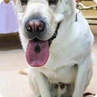 Adopt A Pet :: Oscar - Rigaud, QC