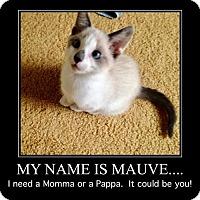 Adopt A Pet :: Mauve - Hampton, VA
