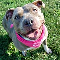 Adopt A Pet :: Sky - Wilmington, DE