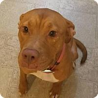 Adopt A Pet :: Honey Hudgens - Cantonment, FL