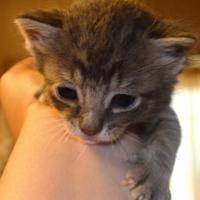 Adopt A Pet :: Eros - St. Martinville, LA