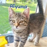 Adopt A Pet :: Aiyuma - York, PA