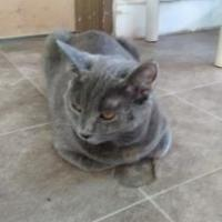 Adopt A Pet :: Artie - Santa Paula, CA
