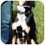 Photo 4 - Shepherd (Unknown Type) Mix Dog for adoption in Osseo, Minnesota - Buddy